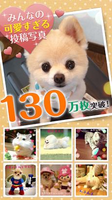 かわいい動物写真がたくさん~パシャっとmyペット~ Androidアプリ