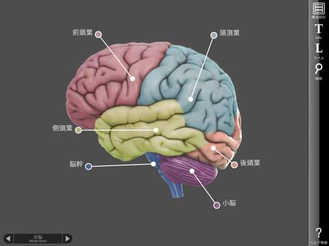 3D Brain iPadアプリ