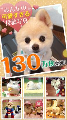 犬や猫のかわいい動物写真満載~パシャっとmyペット~ iPhoneアプリ